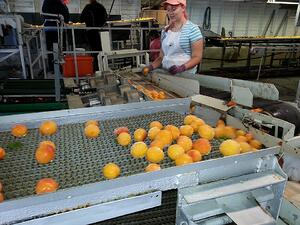 Problems of a food manufacturing company and how leasing can help