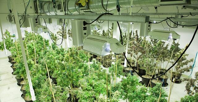 Marijuana-Equipment-Leasing-The-Hidden-Opportunity-to-Deduct-Marijuana-Equipment.jpg
