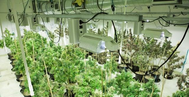 Marijuana-Equipment-Leasing-The-Hidden-Opportunity-to-Deduct-Marijuana-Equipment.jpg
