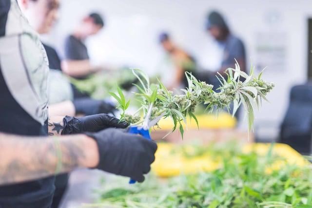 Marijuana-Equipment-Leasing-What's-Happening-in-the-Market-Today.jpg