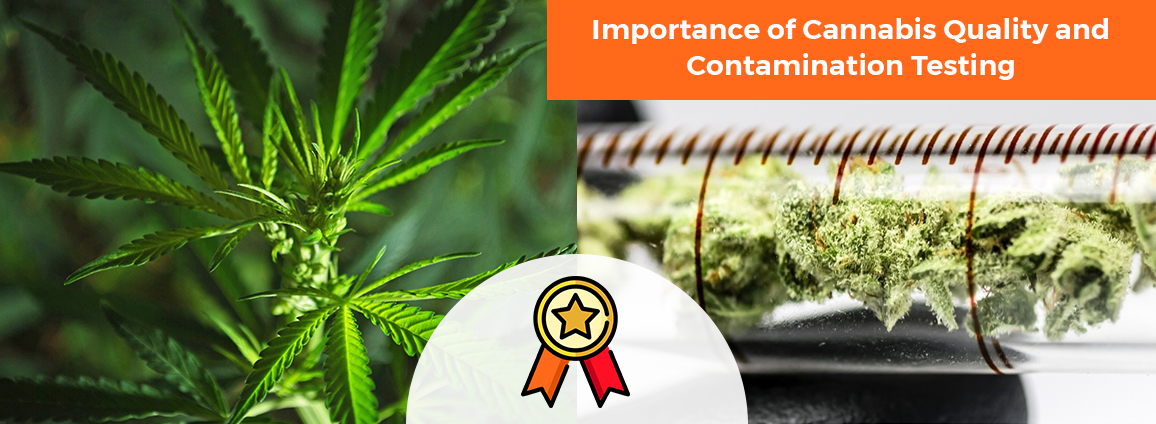 Importance of Cannabis Quality and Contamination Testing